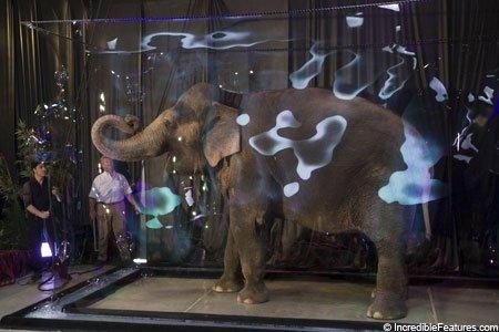 Слон в мыльном пузыри - удивительное достижение!